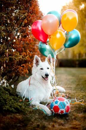 Fødselsdag for børn og hunde